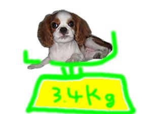 体重_20080121.jpg