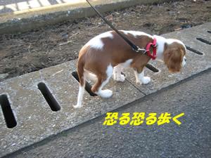 へっぴり散歩.jpg