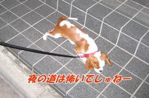 へっぴり散歩(夜).jpg