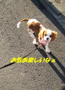 楽しいお散歩.jpg