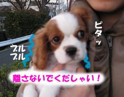 抱っこ散歩2.jpg