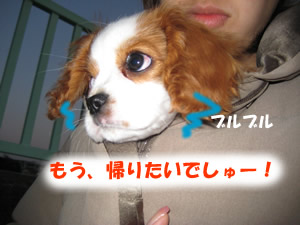 抱っこ散歩3.jpg