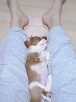 寝姿(足の間).jpg