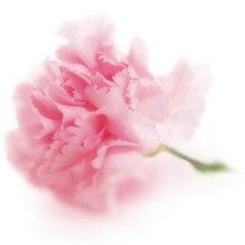 flower08_300.jpg