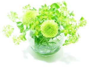 flower27_300x225.jpg