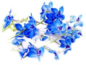 flower19_300x225.jpg