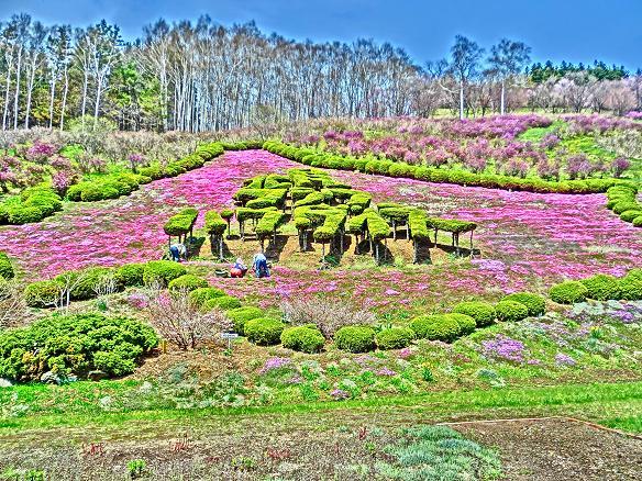 北見フラワーパラダイスの花々1 ...