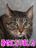 お蔭様でシマちゃんは幸せになれました.jpg
