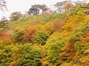 岩手台温泉の紅葉