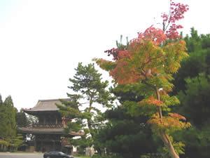 清涼殿の紅葉