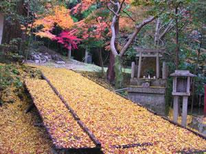 今熊野神社の紅葉