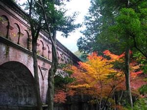 南禅寺琵琶湖疎水の紅葉