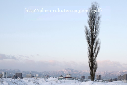 ポプラの画像 p1_30