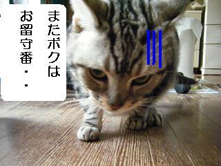 DSCF2957_pa.JPG