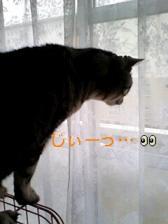 070327_1225~0001-0001.jpg
