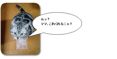 puchi001.jpg