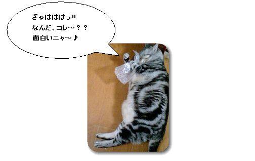 puchi002.jpg