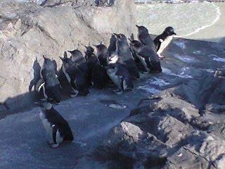 ペンギン05