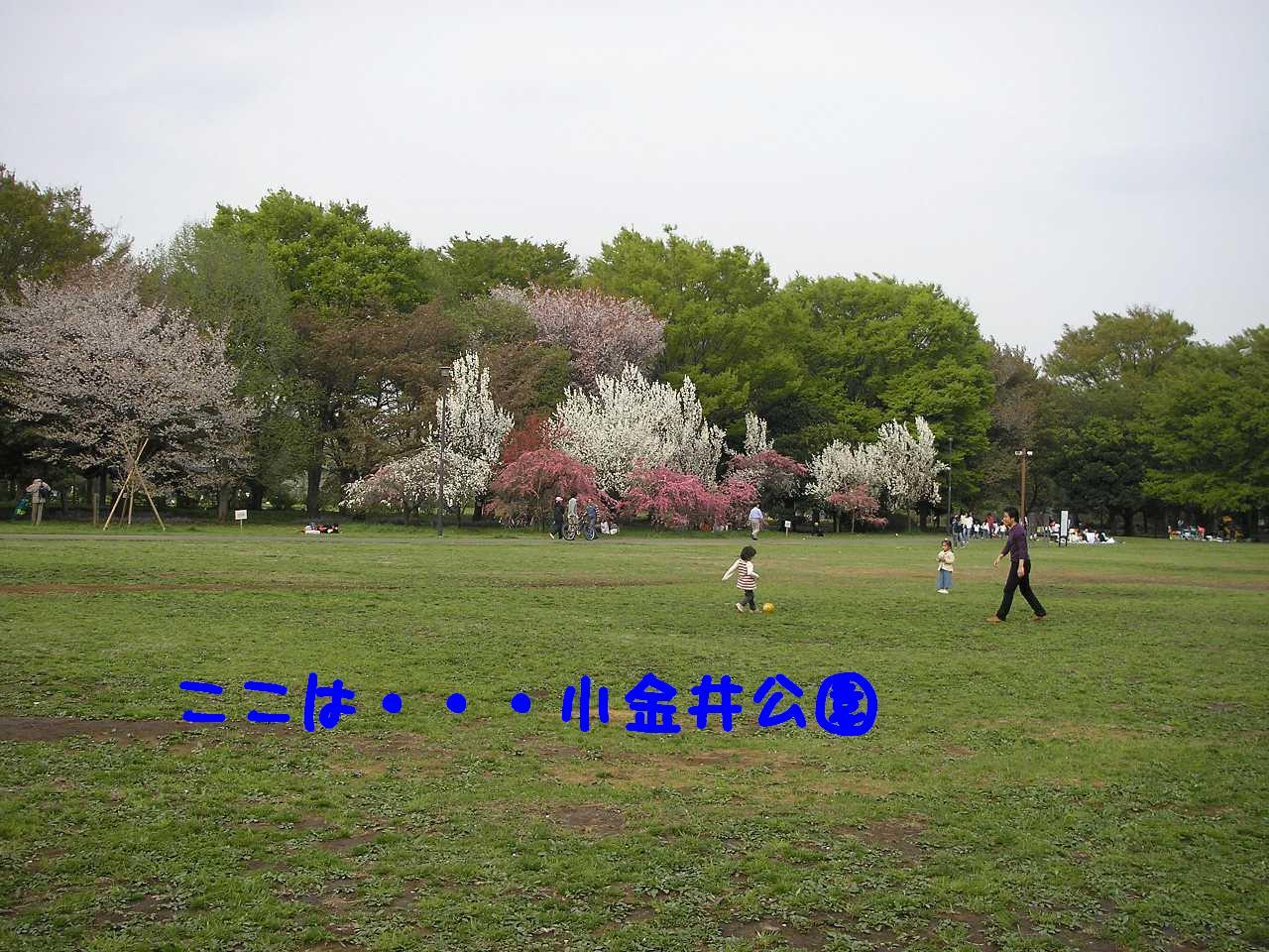 P4120260.jpg