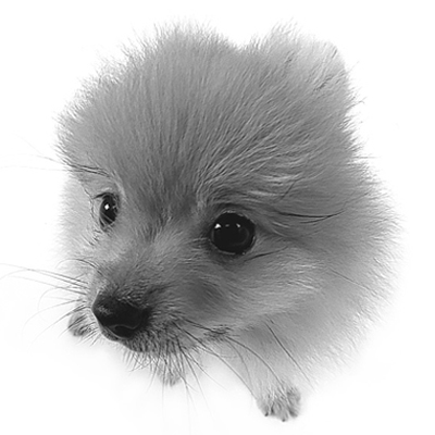 犬の無料画像 「いぬ・犬・イヌがいっぱい!」
