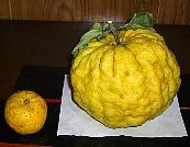 柚子との比較.jpg