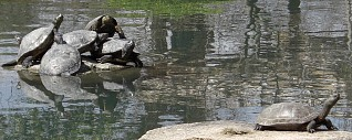 ひょうたん池2.jpg