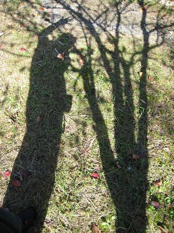 木と私の影 影  光と影そしてどんぐりの日向ぼっこ・・・