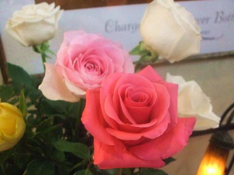 薔薇の画像 p1_8
