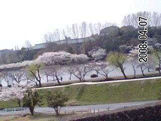 【母と花見】2008年4月7日