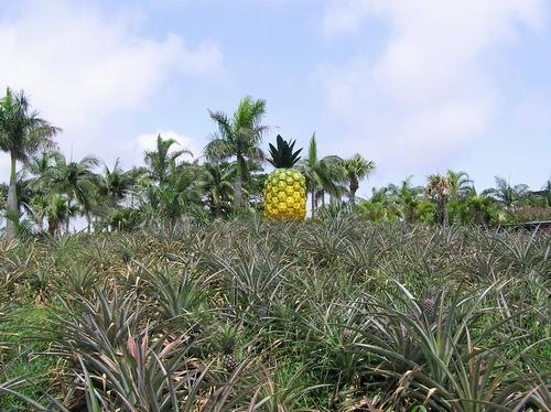 パイナップルパーク4