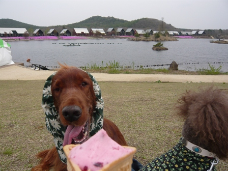 羽鳥湖26.JPG