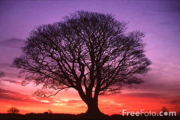 15_19_1---Tree--Sunrise--Northumberland_web.jpg