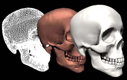 骸骨の画像 p1_22