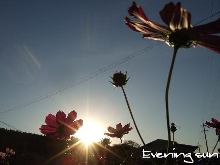 Evening sun1.JPG