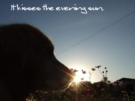 It kisses the evening sun..JPG