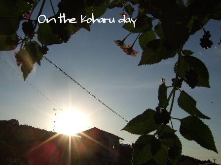On the Koharu day.JPG