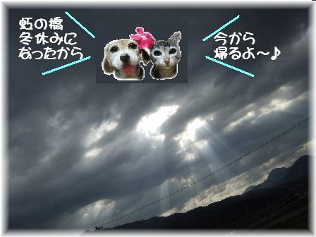 虹の橋の冬休み.JPG
