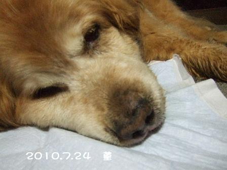 2010.7.24 菫.JPG