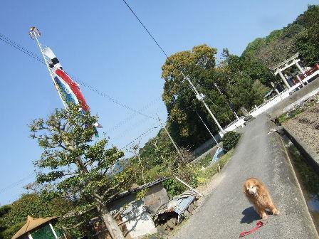 5月5日の菫.JPG