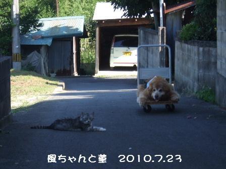 3 2010.7.23 菫.JPG