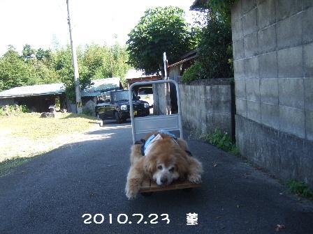 4 2010.7.23 菫.JPG