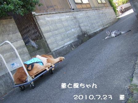 菫と風ちゃん.JPG