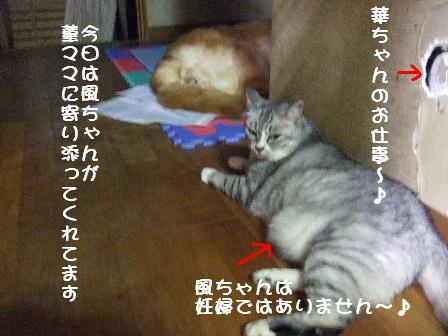 風ちゃんと菫2010.7.26.JPG