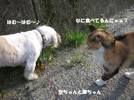 空ちゃんと華ちゃん.JPG