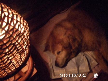 2010.7.4    菫 6.JPG