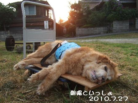 2010.7.27朝陽といっしょ.JPG