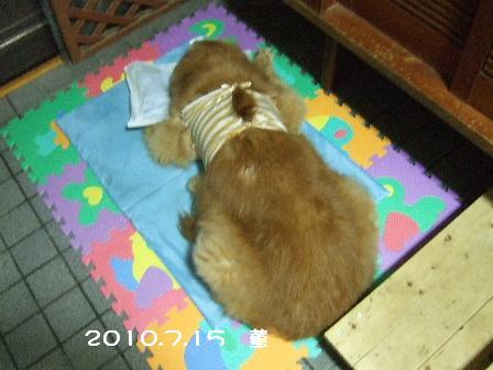 2010.7.15 菫3.JPG