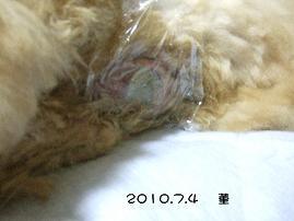 2010.7.4    菫 2.JPG