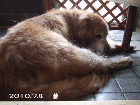 2010.7.4    菫 4.JPG