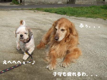 風ちゃんとすみれ1.JPG